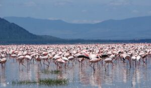 DAY TRIP TO LAKE NAKURU